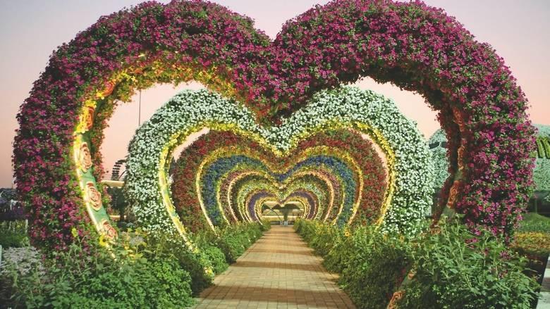dubai-miracle-garden4